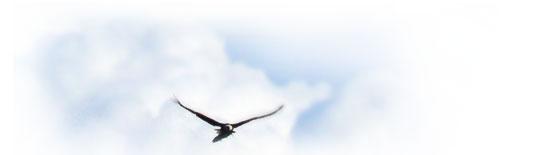 aigle Battement d'aile de l'aigle