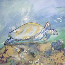 Image La tortue se réveille