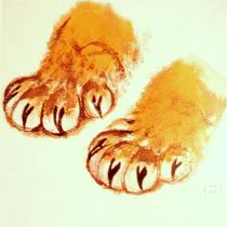 illustration Les pattes du Tigre