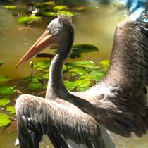 Image Qi-Gong : La grue libère ses ailes
