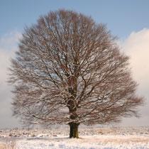Image Energie de l'hiver !