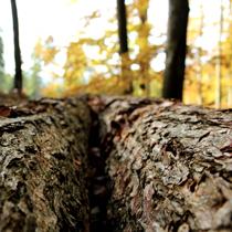 Image QiGong : Vibrer avec l'élément bois