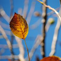 Image Qi-Gong d'automne : Voyage du vent