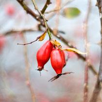 Image L'hiver : saison froide, profondeurs, et intériorité !