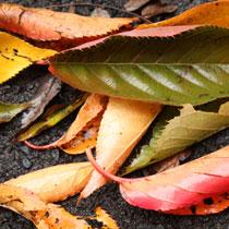 illustration Une question soulève la réponse… «le vent soulève les feuilles»