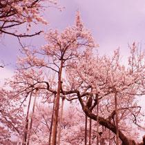 Image A la veille du printemps !