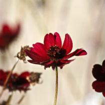 image article Les Plaisirs de l'automne